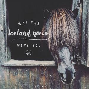 Bild von einem Islandpferd im Stall