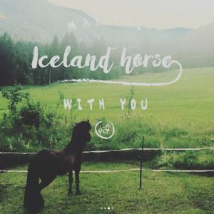 Islandpferd auf der Weide mit Blick in die Natur